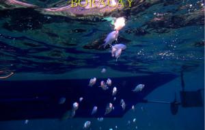 菲律宾娱乐-浮潜