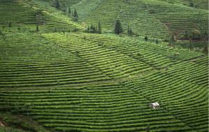 【普洱图片】把心留在普洱——红土上的绿色马尔代夫