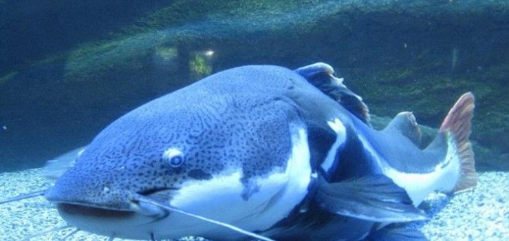 富国海底世界(在线)