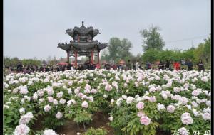 【菏泽图片】2013菏泽牡丹行摄(一)曹州牡丹园