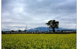【仙居图片】春到皤滩古镇--仙居一游
