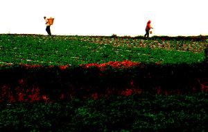 【东川图片】东川.土地为什么这样红