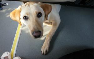 【桐庐图片】带着狗狗去春游——桐庐两日游
