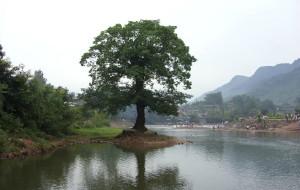 【洪雅图片】这是我的家乡,虽然排不上名次,但是我依旧爱我的家乡—柳江古镇