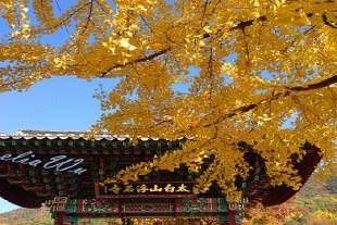 榮州市圖片