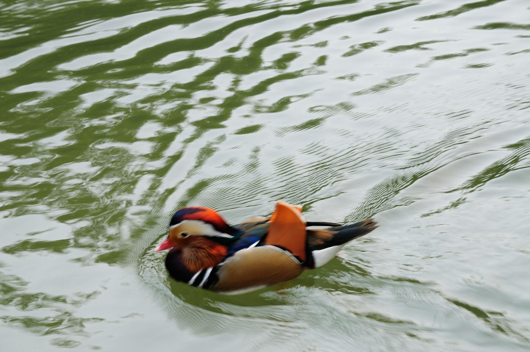 上海动物园的水上动物
