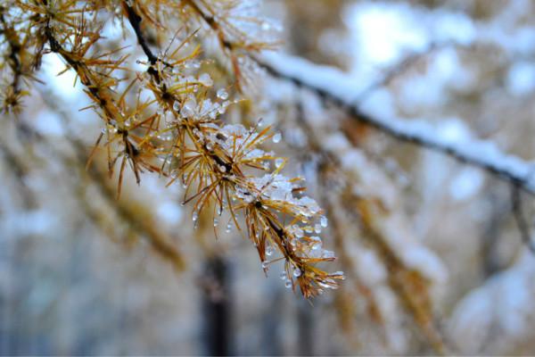 每一片树叶,每一根树枝都是一件艺术品.   小桥也换了雪白的衣服.