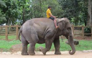 斯里兰卡娱乐-Clo Lanka Tours Day Tours