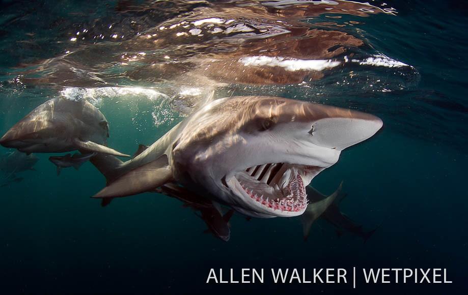 各种动物牙齿图片介绍