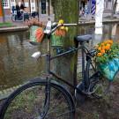 荷兰攻略图片