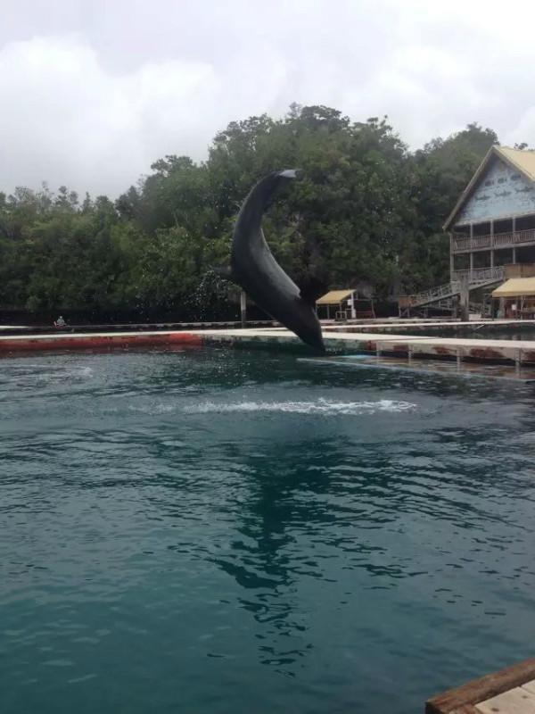 大洋洲地区旅游 帕劳旅游攻略 帕劳之旅潜水零距离接触海底世界