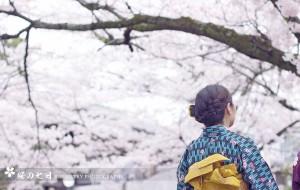 【京都图片】【日本·关西】和樱花君的七日约会——附京阪奈赏樱地评析