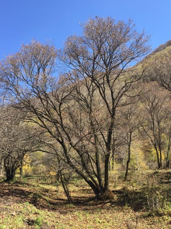 黑龙山森林公园位于河北省张家口市赤城县黑龙山林场。该公园地处北京正北方向,与延庆一山之隔,距北京240公里,是距京较近的一处原生态森林公园。 公园包括三个景区: (我们此次只游览了东猴顶景区的一小部分)(1)黑河源景区因该景区有黑河源头标志而得名。黑河是首都北京主要饮用水源头。源头有自涌泉多处,清澈透明,建有黑河源头石刻和黑河简介。石刻为黑河源头,落款为湘人晚发,为湖北人刘晚发所书。 (2)东猴顶景区因该景区有东猴顶山峰而得名。东猴顶海拔2292.