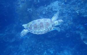 【美娜多图片】潜海底世界去--美娜多【Manado】万鸦老