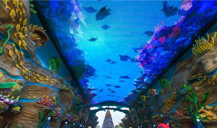 长隆野生动物世界+珠海长隆海洋王国