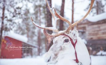 芬兰 宝藏纪念