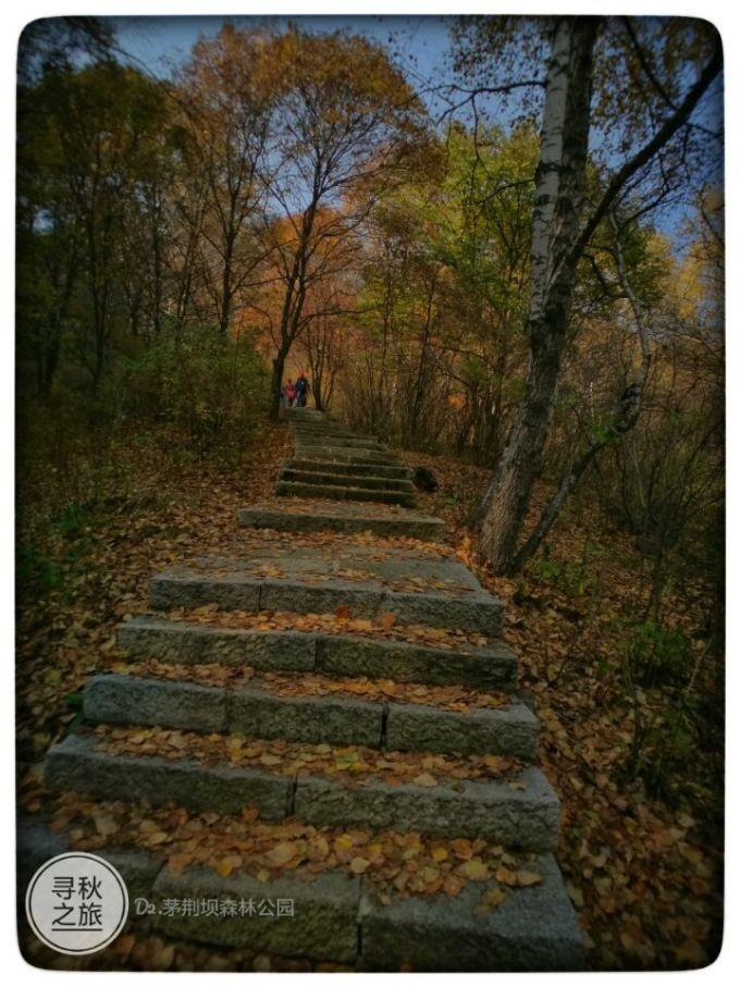 茅荆坝国家森林公园