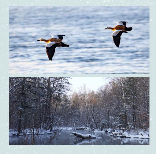 镜泊湖冬捕——亲自与赫哲族鱼把头一起参与冰上凿洞冬季捕鱼亲身
