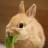 bobo兔