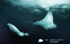 【帕劳图片】他說:我們去Palau(帕劳)潛水吧!順便結個婚!