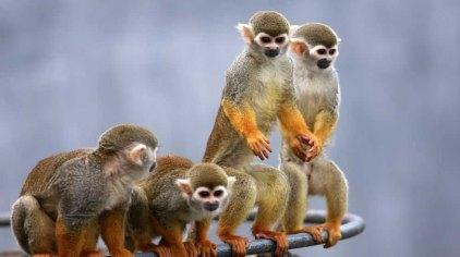 西霞口神雕山野生动物园位于山东威海荣成成山镇西霞口,是西霞口旅游