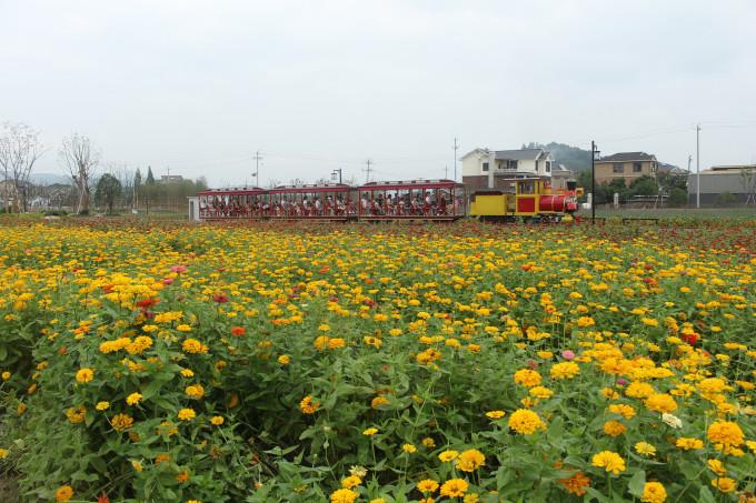 徜徉在花的海洋——杭州径山千花里