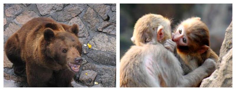 杭州动物园门票/电子票/快速入园(一座集野生动物保护科研科普教育和