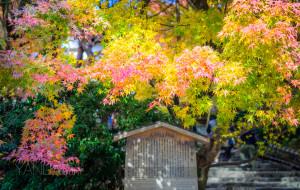 【奈良图片】【枫叶季】在京都最美的时光,遇见