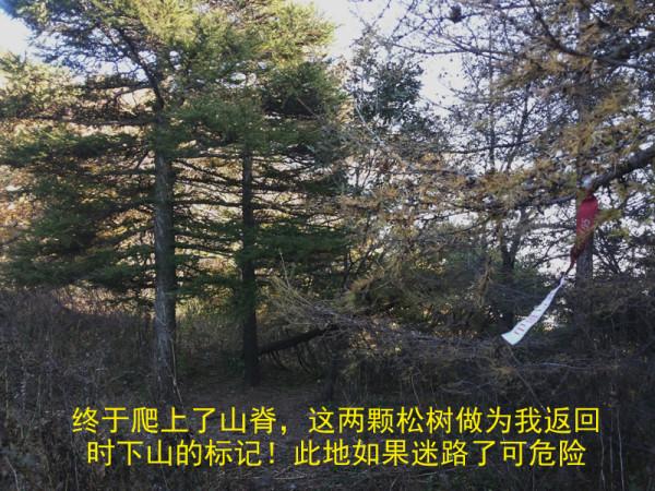 河北省旅游 河北旅游攻略 六里坪国家森林公园   年票指数:2  今秋