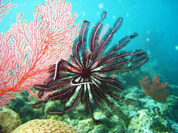 这里是著名深潜点之一,世界排名前三,堪比亚马里亚纳大海沟.