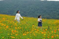 国庆灵山小镇——拈花湾看梵天花海、体验禅意生活