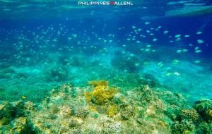 【马尼拉图片】【享入菲菲】聆听海洋旋律,邂逅岛屿风情