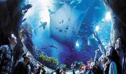 石家庄海洋公园门票(当日可订)