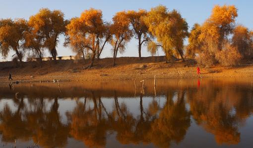 位于塔克拉玛干沙漠东北边缘的塔里木河中游