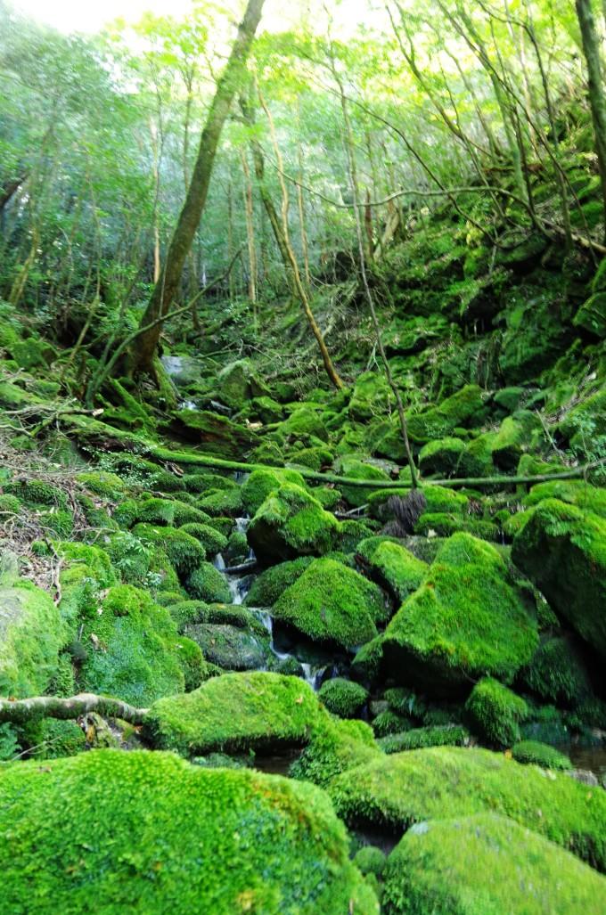 壁纸 风景 森林 桌面 680_1027 竖版 竖屏 手机