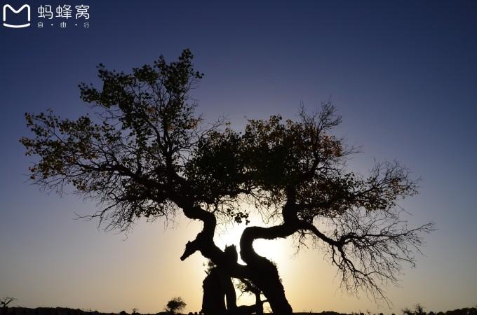 在怪树林遗址边走边看,一直等到夕阳西下,拍摄怪树林剪影的最佳