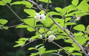 【天门图片】天女山自驾一日游     天女木兰花开的季节和枫叶红了的季节http://n2-q.mafeng