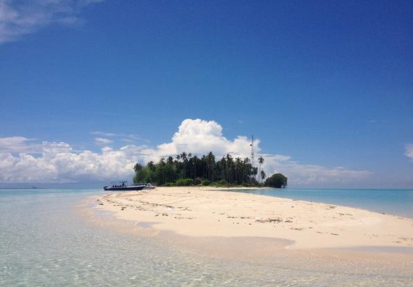 头像微信椰子树大海