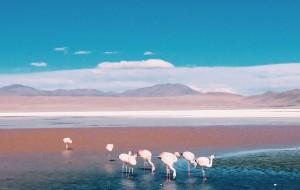 【智利图片】那年秋天南半球漫山遍野的草泥马-智利、玻利维亚、秘鲁闪游记
