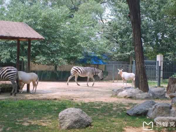 济南动物园--济南游记--蚂蜂窝