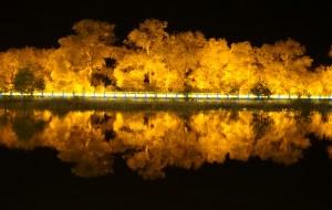 【呼和浩特图片】西部环游6600公里之三:巴彦淖尔到额济纳630公里的S312公路,夜幕下的胡杨林