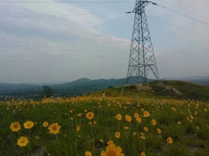 乡村花海,大悟给你一个宁静的夏天