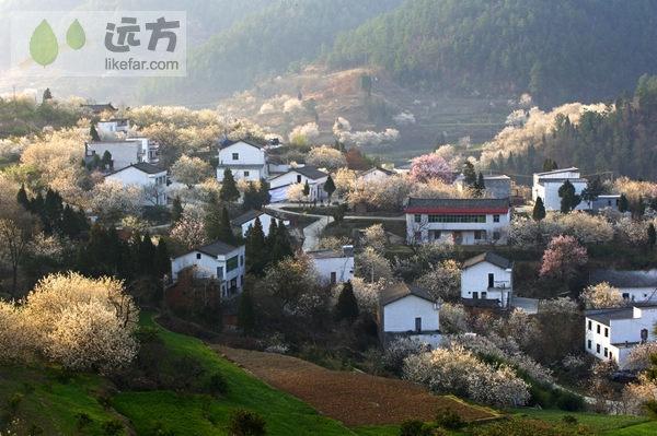 湖北郧县樱桃沟  拥一袭满满的花香入梦